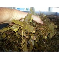 Eucalyptus Processed Leaf (Mulch By-Product)